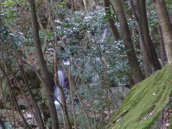 P1300857三連の滝.JPG