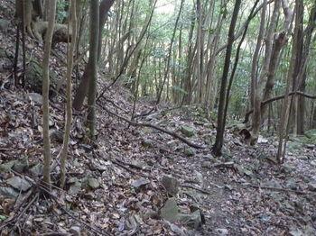 P1300861ガレ石の山道.JPG