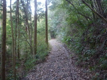 P1300893未舗装林道.JPG