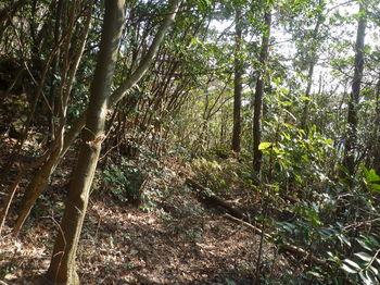 P1300934巻き道(右方向).JPG