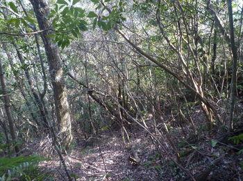 P1300971不明瞭な雑木シダ尾根の下降.JPG