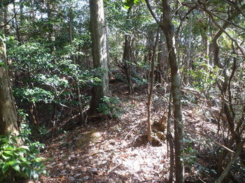 P1300977ヒノキ植林境.JPG