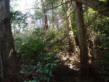 P1300990植林境・灌木.JPG