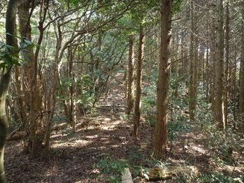 P1300995右ヒノキ林植林境.JPG