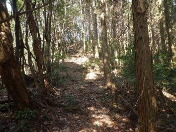 P1300997植林境.JPG