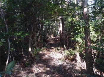P1310003植林境上り.JPG