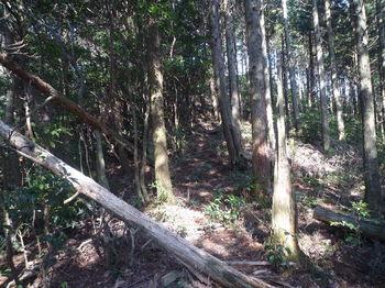 P1310007上り・植林境.JPG