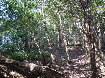P1310011右斜面の雑木疎林.JPG