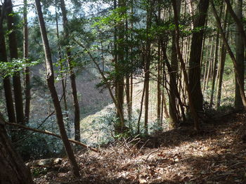 P1310021左の伐採谷.JPG