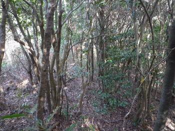P1310028雑木疎林.JPG