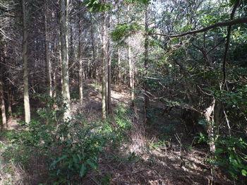 P1310029ヒノキ植林境.JPG