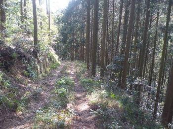 P1310043林道.JPG