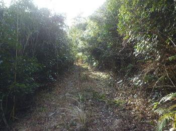 P1310114荒れ気味の林道.JPG