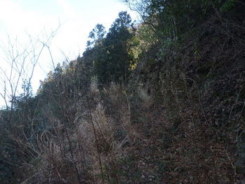 P1310133左の林道へ.JPG