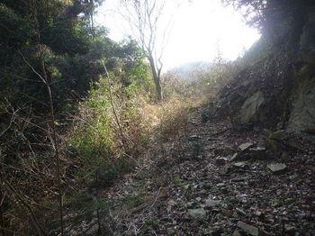 P1310134沢沿いの林道.JPG