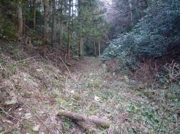 P1310138林道(歩きやすくなる).JPG