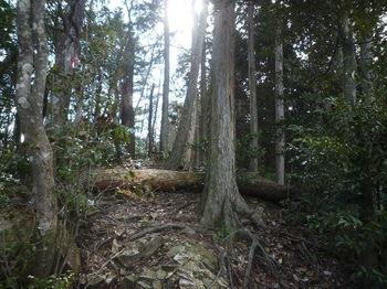 P1310153450mピーク・ヒノキ植林出合い.JPG