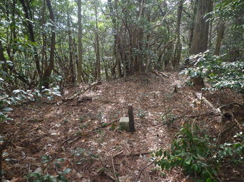 P1310158 480mピーク・石杭「ヨシキ」.JPG