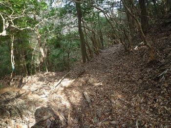 P1310167北側の山道(2分岐).JPG