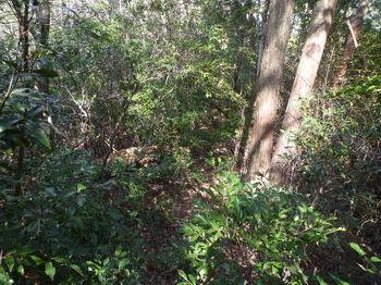 P1310196植林境灌木ヤブ.JPG