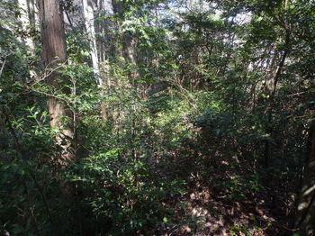 P1310206植林境・灌木ヤブ.JPG