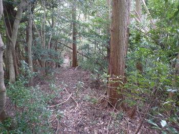 P1310219植林境.JPG