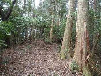 P1310228植林境上り.JPG