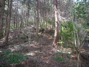 P1310258植林境.JPG