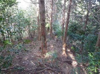 P1310274 490m支尾根分岐からの下り・植林境.JPG