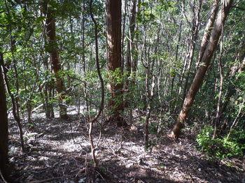 P1310279不明瞭な植林境.JPG