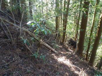 P1310284右の植林帯へ逃げる.JPG