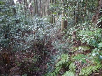 P1310299灌木・山道.JPG