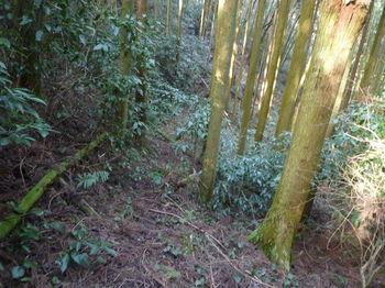 P1310302植林谷沿い・山道.JPG
