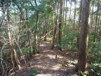 P1310459植林境平坦尾根.JPG