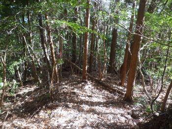 P1310471 330m雑木植林混合林.JPG