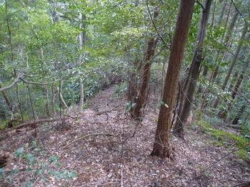 P1310484右の植林境小尾根へ.JPG