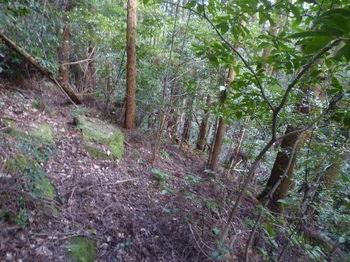 P1310487植林斜面.JPG