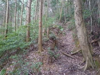 P1310664植林沿い・巻き道.JPG