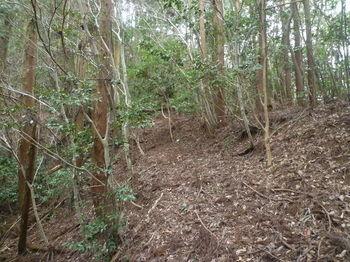P1310669植林境・鞍部.JPG