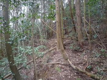 P1310670植林沿い・巻き道.JPG