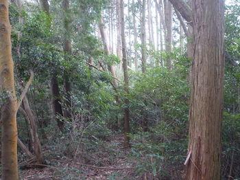 P1310687植林境.JPG