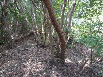 P1310750雑木尾根上り・右に掘割り道.JPG