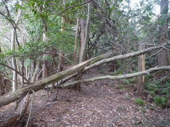 P1310754植林境.JPG