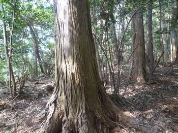 P1310760植林境・上り.JPG