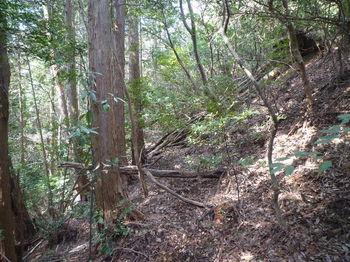 P1310776植林境・左巻き道.JPG