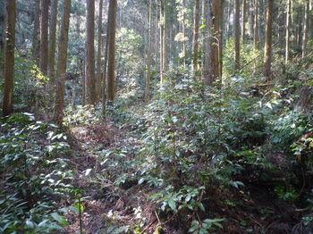 P1310825倒木の左道(逆方向).JPG