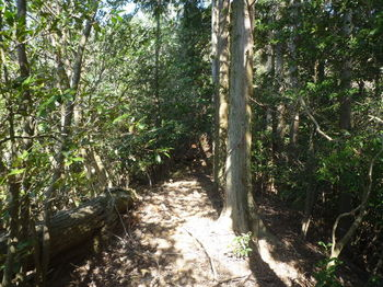 P1310892 350m右側植林の平坦尾根.JPG