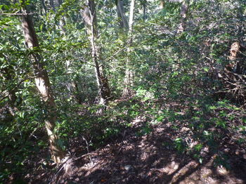 P1310895左側植林境.JPG