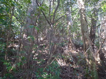 P1310898植林境.JPG