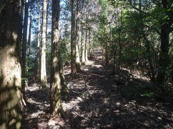 P1310919植林境尾根・上り.JPG